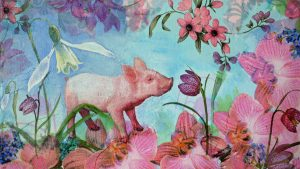 little pig.14