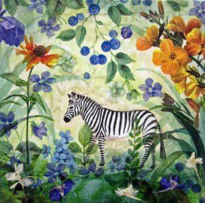 zebra.13